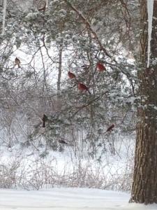 Cardinals closer