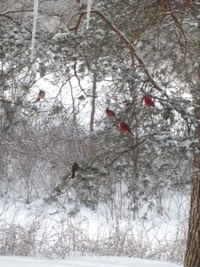 cardinals in tree