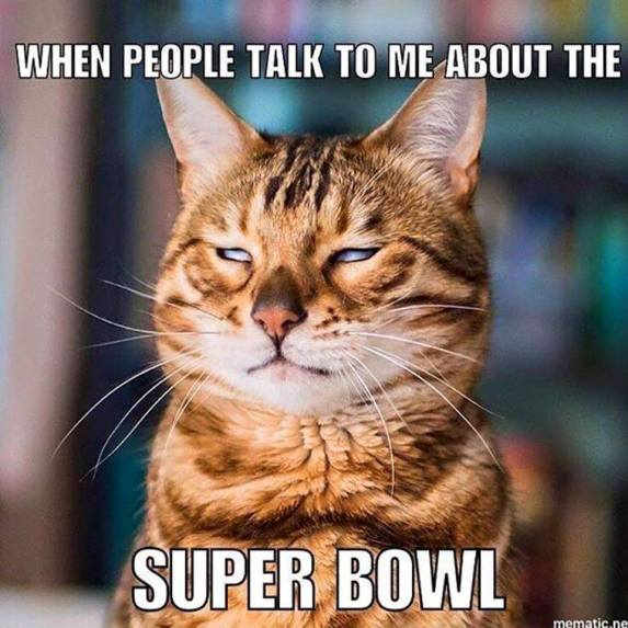 Super Bowl Cat