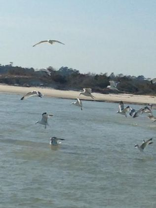 birds-at-pawleys